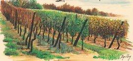 finesbousches.com-vignes